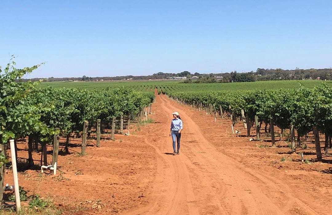 our-vineyard